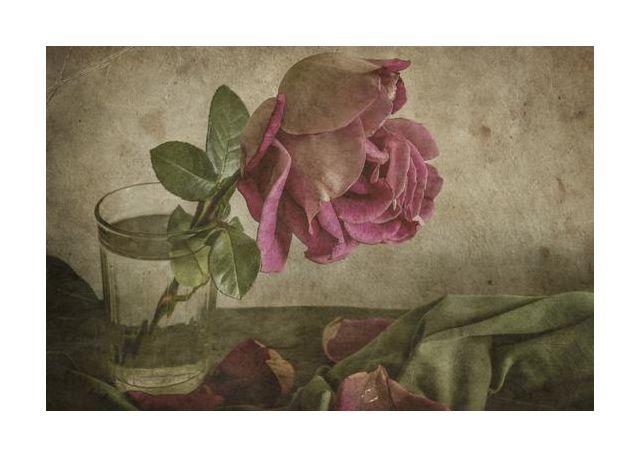 Tear of Rose