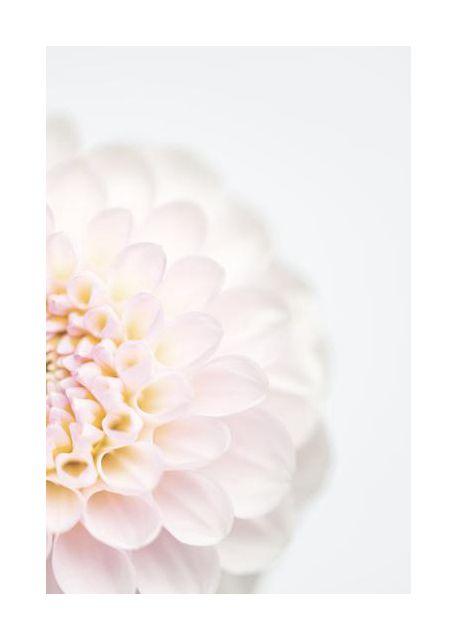 Pink Flower No2