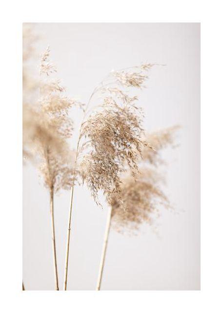 Reed Grass Grey 09