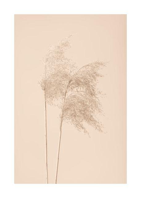 Reed Grass Beige 02