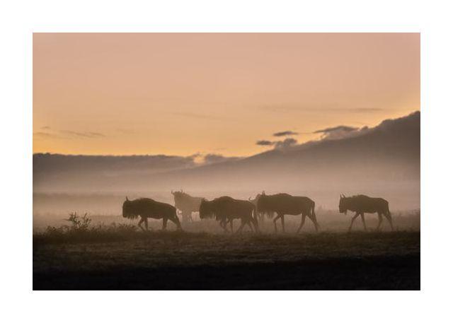 Early morning in Serengeti