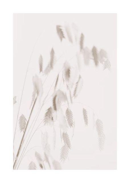 Dried Grass pink