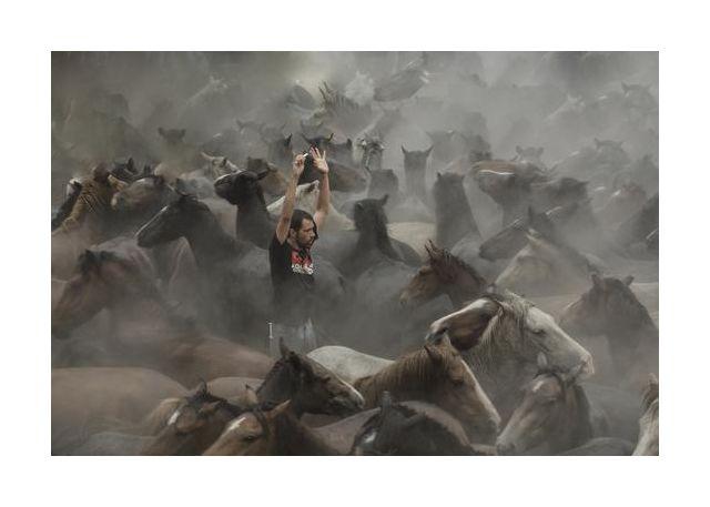 A sea of horses