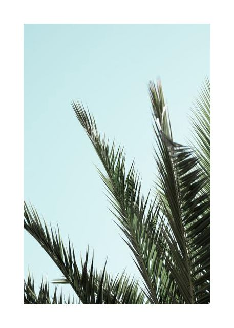 Palm leaves and sky 2
