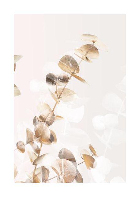Eucalyptus Creative Gold 02