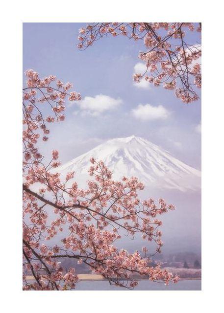 Mt.Fuji in the cherry blossoms