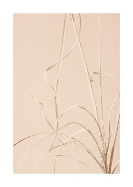 Dried Grass Beige 01