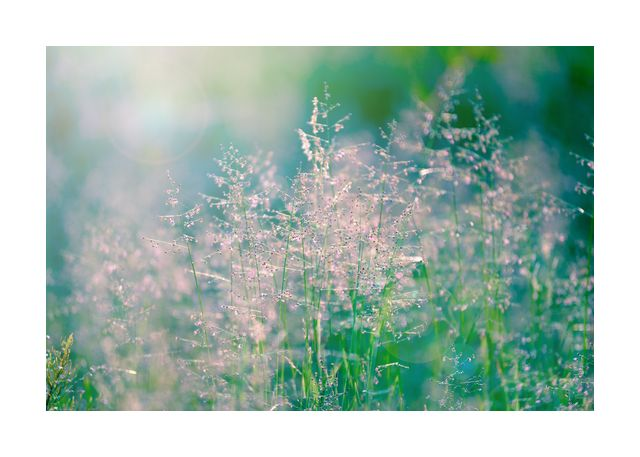 Meadow in morning light 2