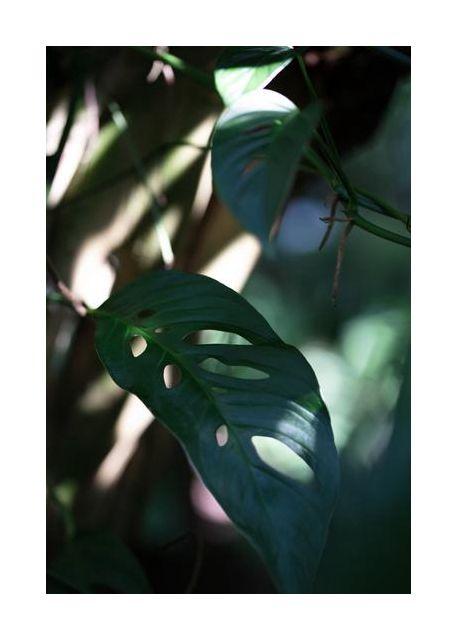 Monstrea Leaves Nature 2