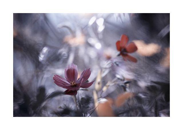 Une autre fleur, une autre histoire