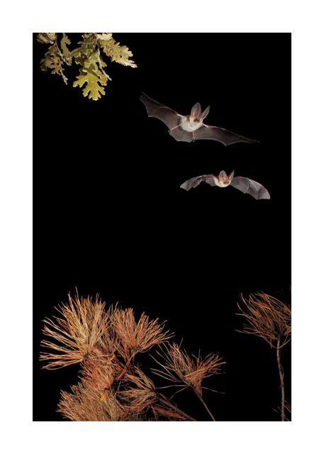 Bats and Halloween