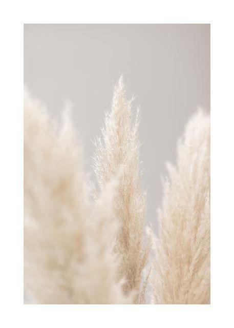 Pampas Grass Grey 04