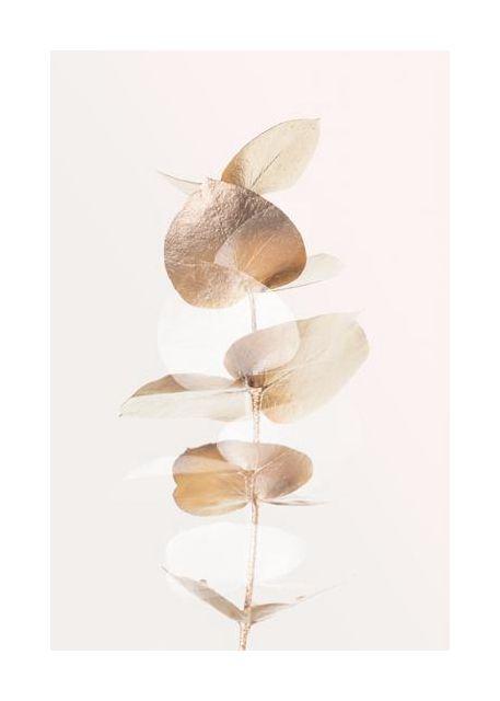 Eucalyptus Creative Gold 04