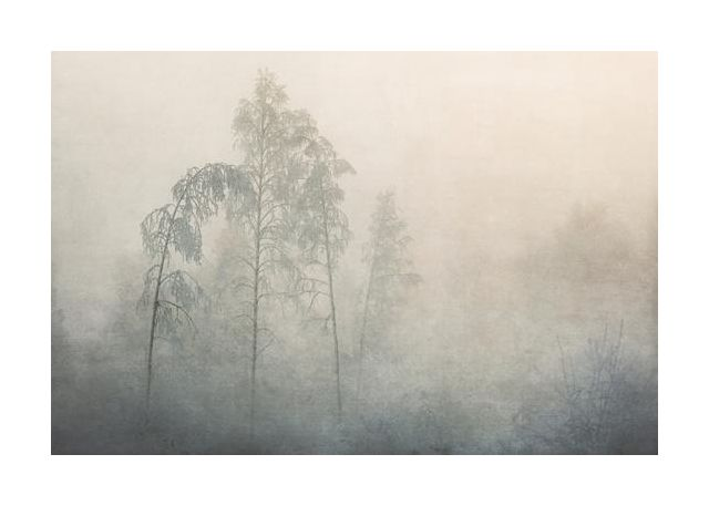 Foggy frozen forest