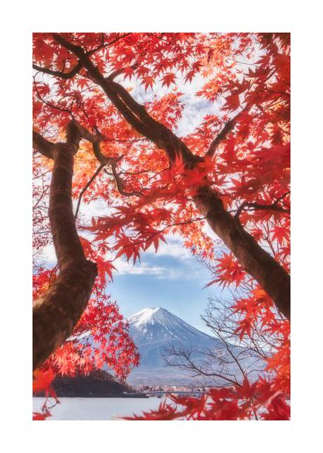 Mt.fuji is in the autumn leaves
