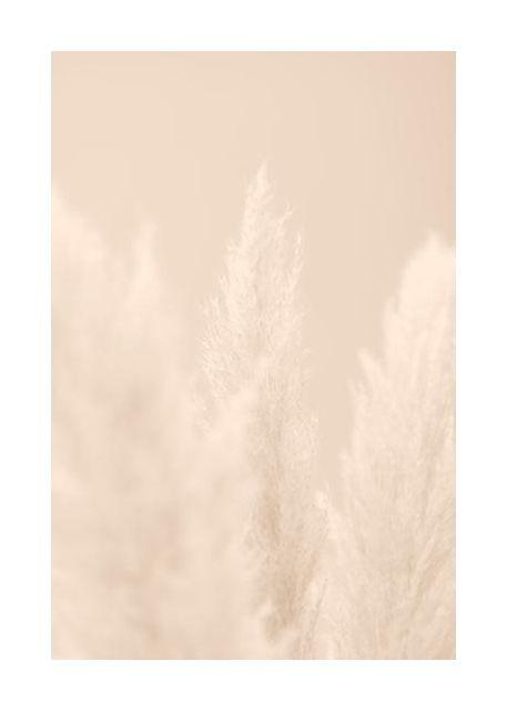 Pampas Grass Beige 04