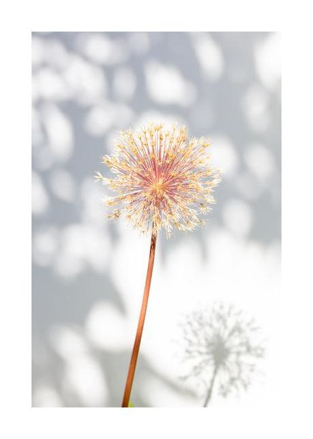 Withered flower, seed house 2