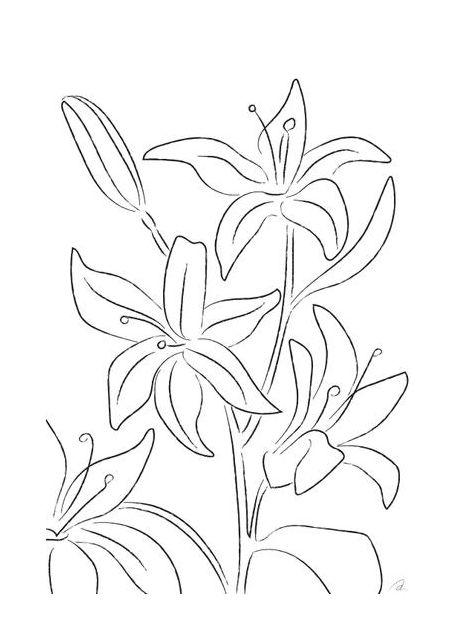Lillies No 02