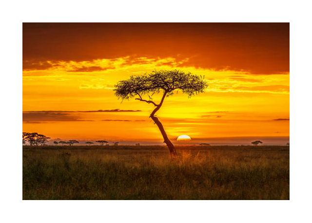 Primordial Africa