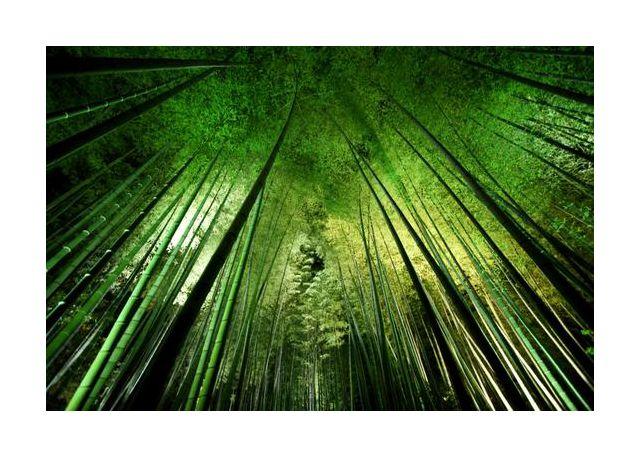 Bamboo night