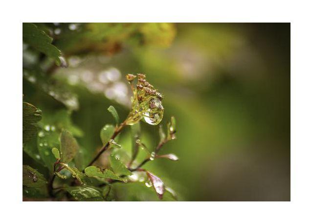 Diamond rain magical