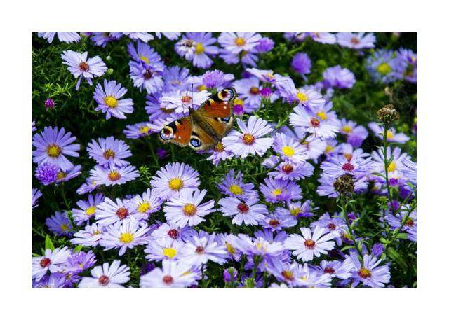 barwny motyl