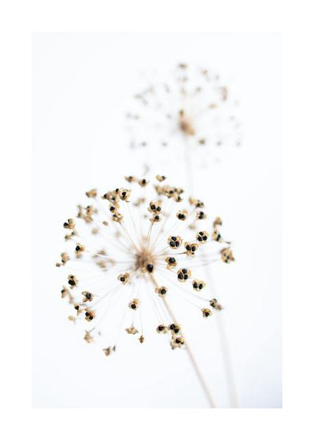 Dried Flower 2 natural
