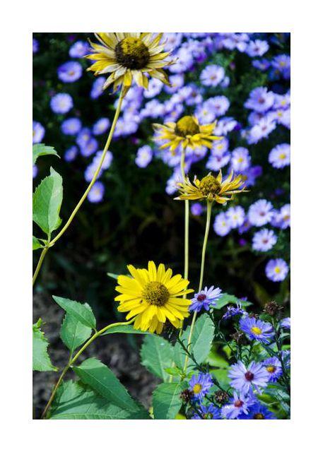 kwiaty w ogrodku