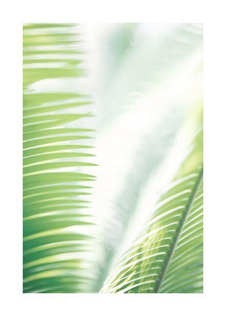 Light Palm tree leaves 2