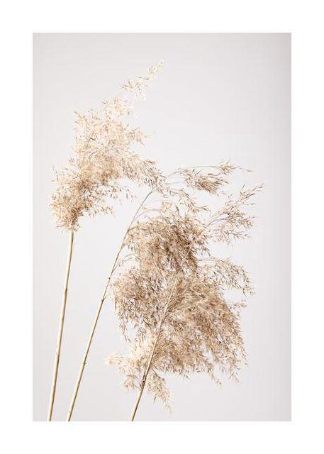 Reed Grass Grey 07