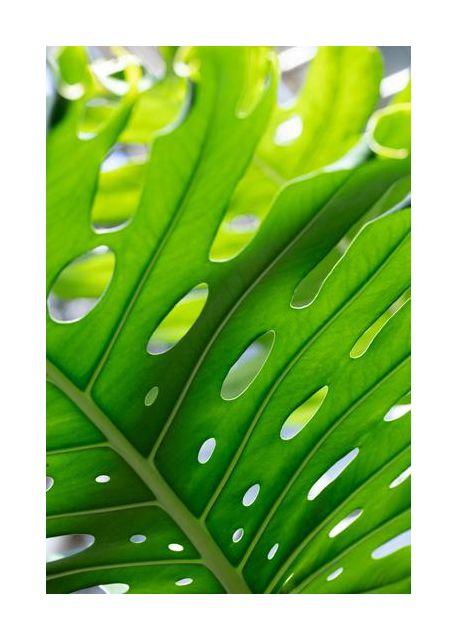 Graphic Leaf 1