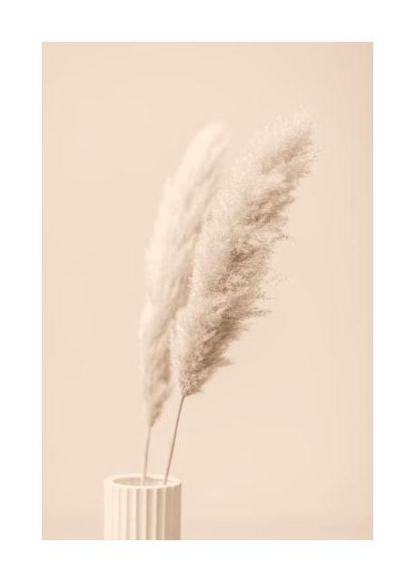Pampas Grass Begie 13