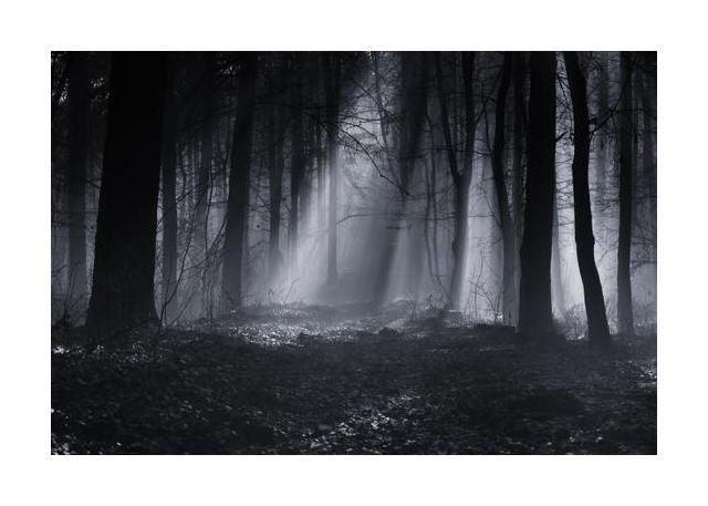 Capela forest