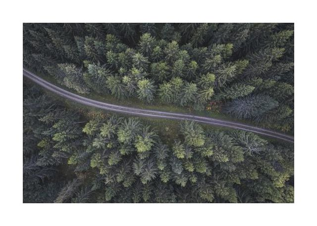 Small road through the forest
