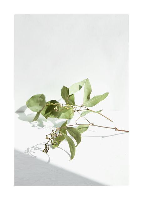 Green plant 2