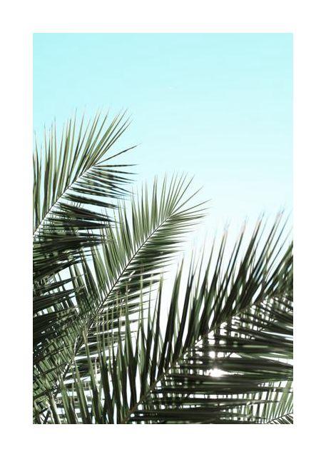 Palm leaves, sky 1