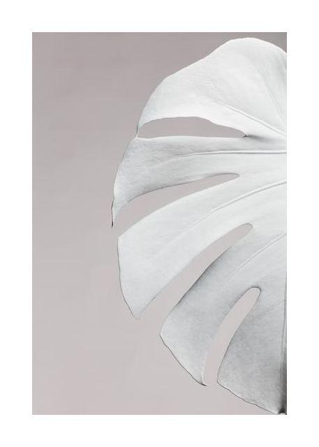 Monstera White 05