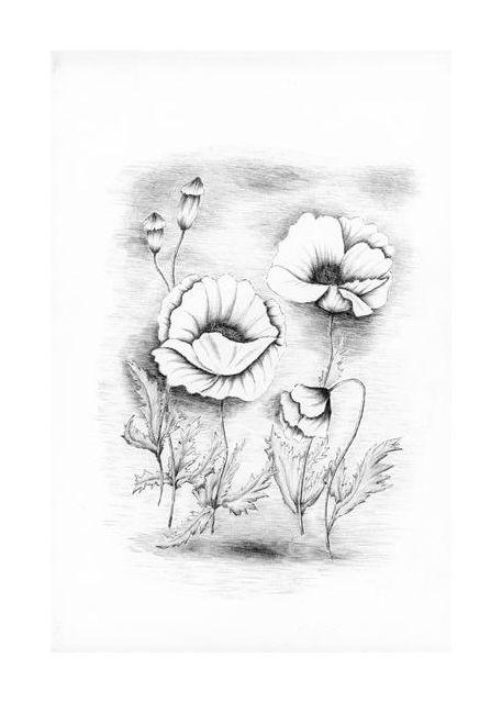 flori de mac