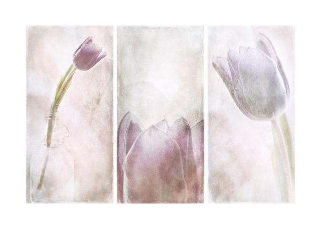 Tulip x3