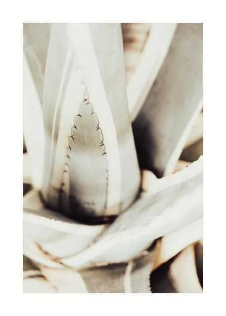 Plant close up 1