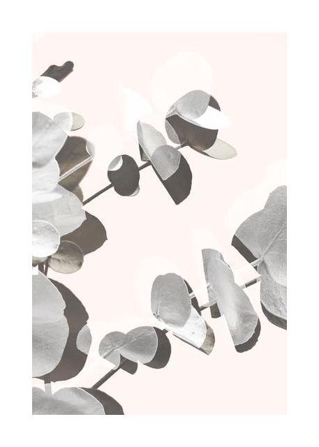 Eucalyptus Creative 14