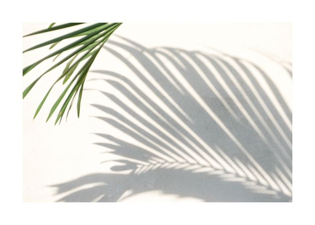 Palm and shadow 1