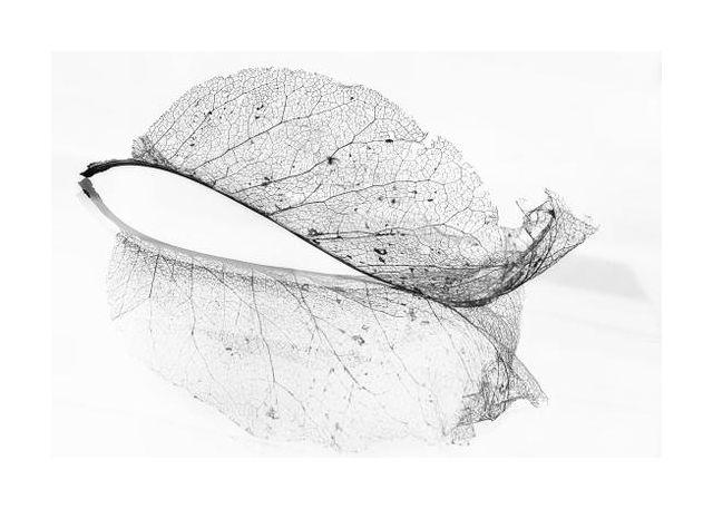 The old leaf