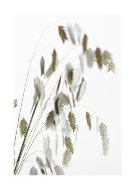 Dried Grass natural
