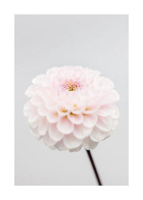 Pink Flower No3