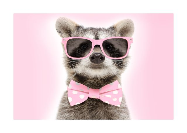 Raccoon with pink glasses