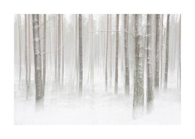 Winterforest in Sweden
