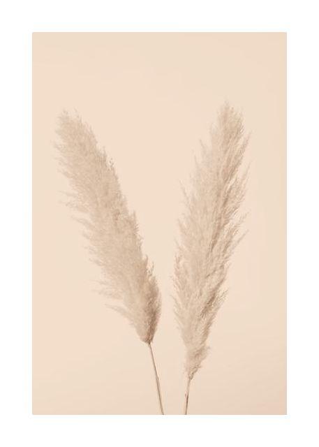 Pampas Grass Beige 01