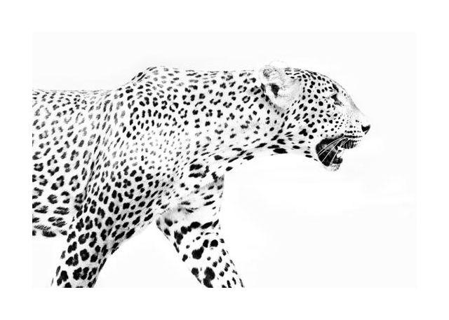 Leopard in Profile