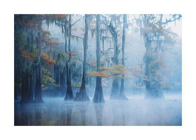 Foggy Swamp Morning